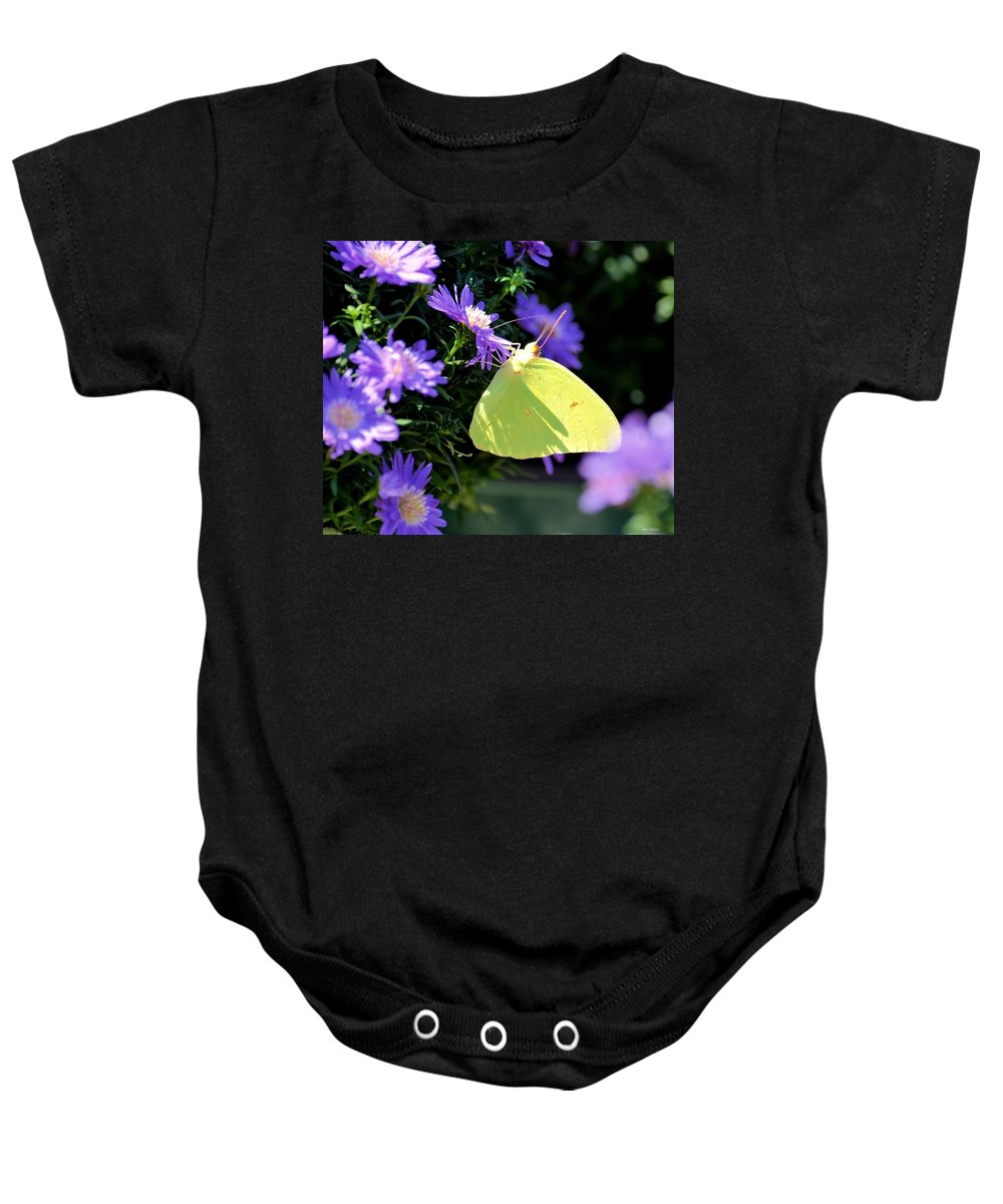 Clouded Sulpher Baby Onesie featuring the photograph A Clouded Sulphur On Lavender Mums by Maria Urso