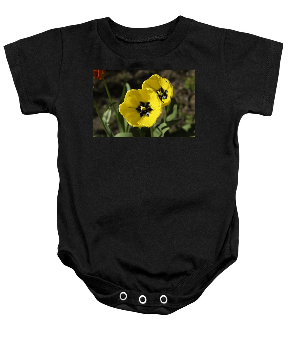 Beautiful Flower Baby Onesie featuring the photograph A Couple Of Bright Yellow Tulip Flowers by Ashish Agarwal