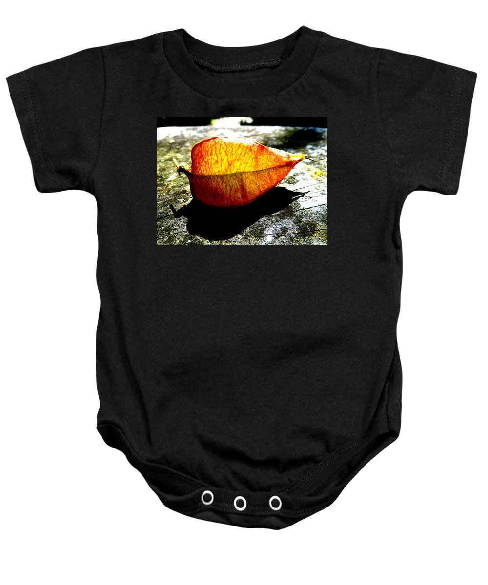 Flora; Lantern; Sun; Sunny; Contrast; Bright; Sunlit; Sunlight; Orange; Wood; Texture; Grain; Halswell; Quarry; Christchurch; Canterbury; South Island; New Zealand; Nz; Shadow; Black; Lichen; Backlit; Seed Baby Onesie featuring the photograph A Lantern Lit By Sunlight by Steve Taylor