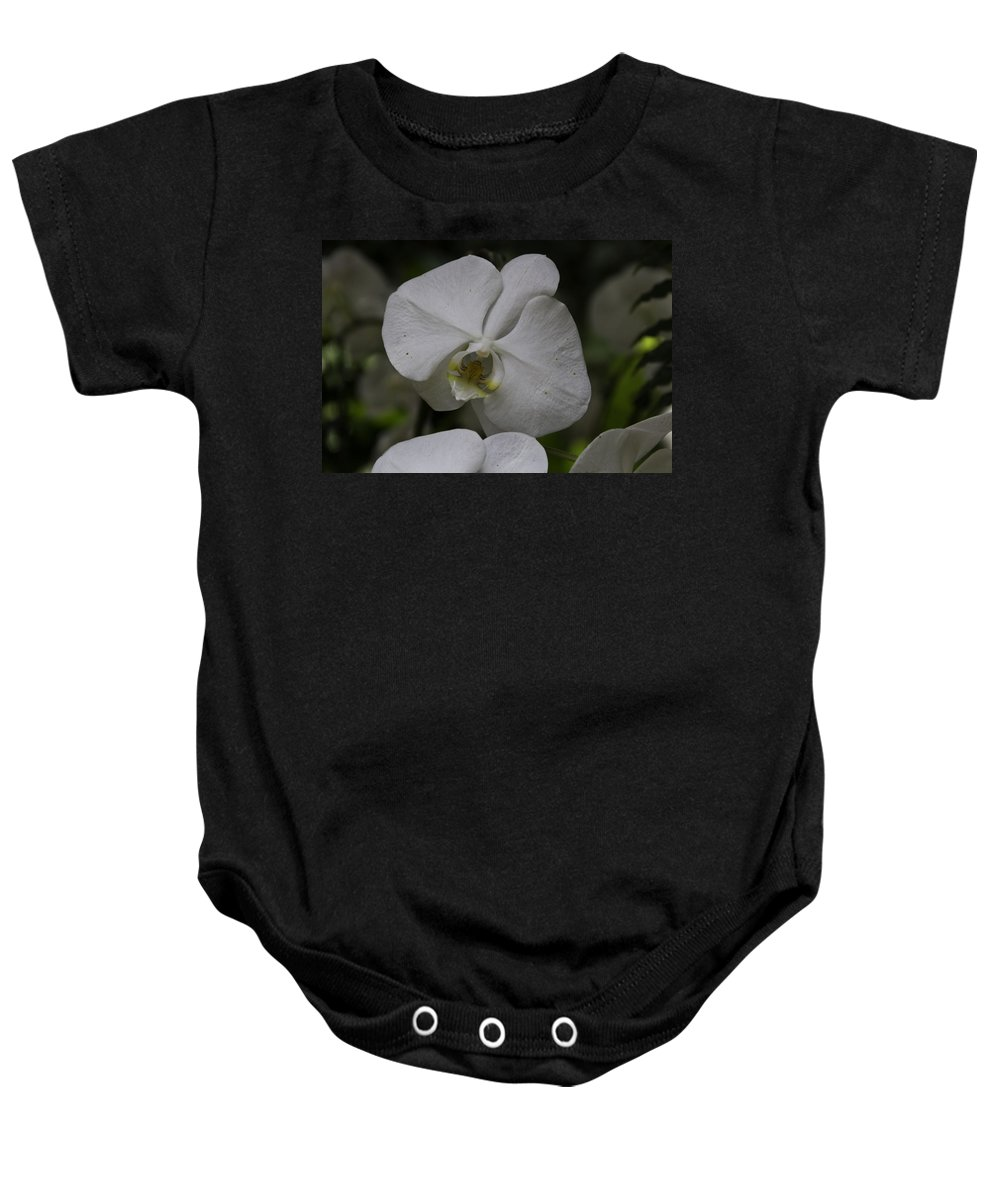 Asia Baby Onesie featuring the photograph A White Orchid Flower Inside The National Orchid by Ashish Agarwal
