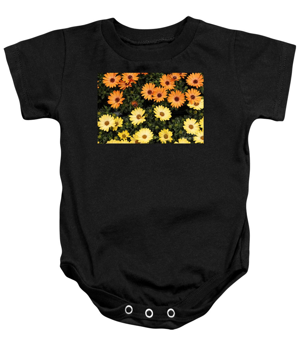 African Baby Onesie featuring the photograph African Daisies by Kerstin Ivarsson