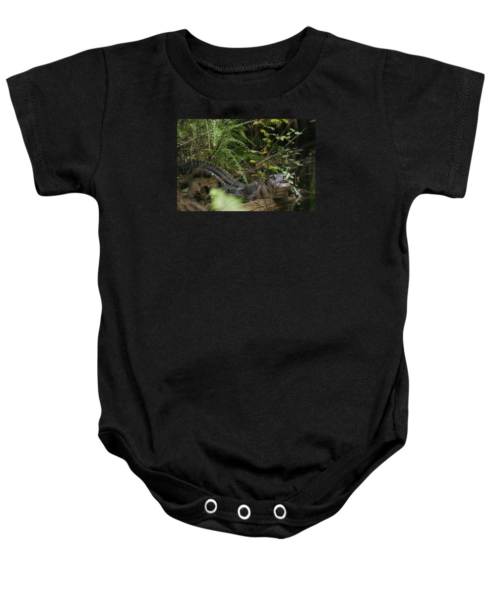 Everglades Baby Onesie featuring the photograph Alligator's Life by Lindsey Floyd