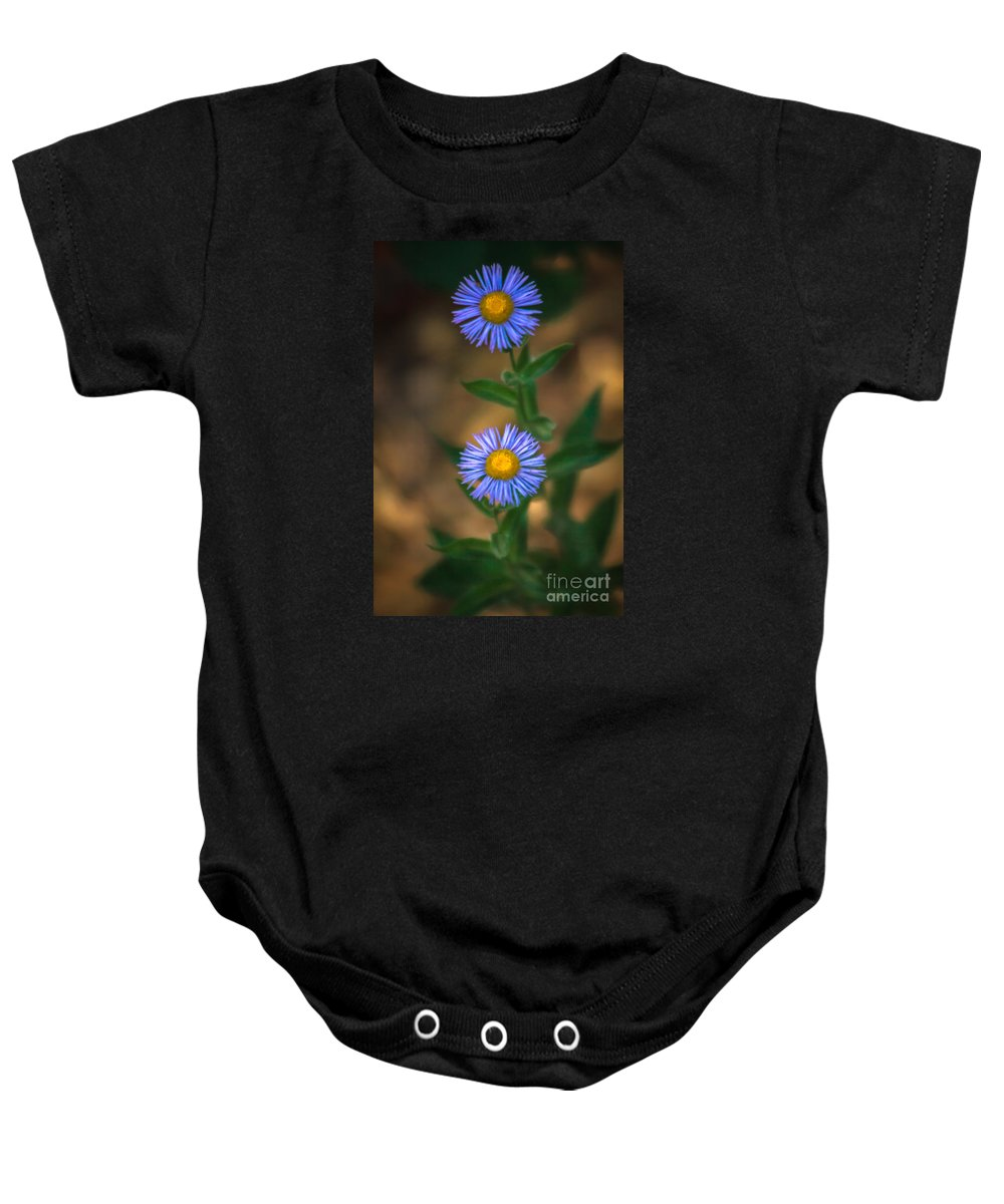 Wild Flowers Baby Onesie featuring the photograph Alpine Aster by Robert Bales