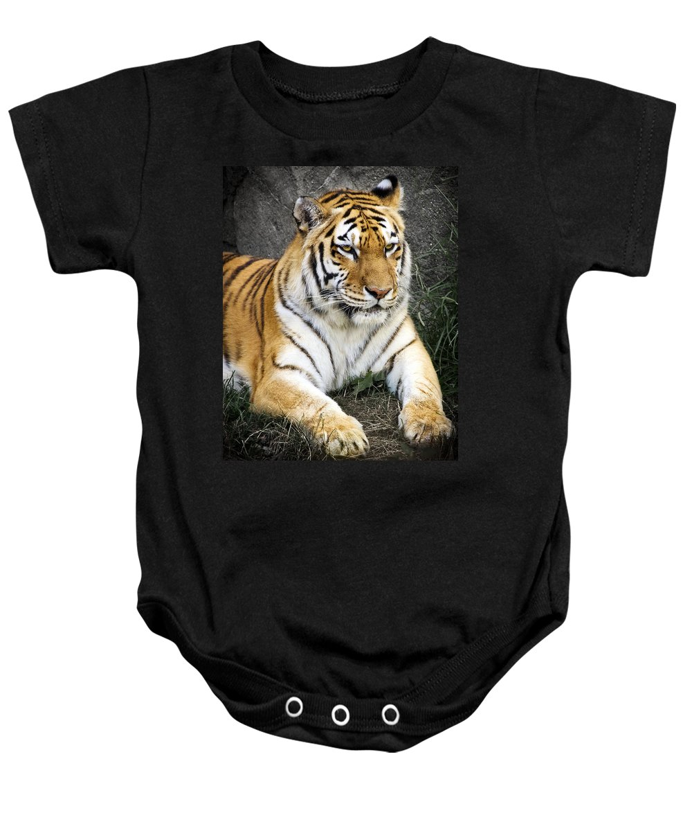 3scape Photos Baby Onesie featuring the photograph Amur Tiger by Adam Romanowicz
