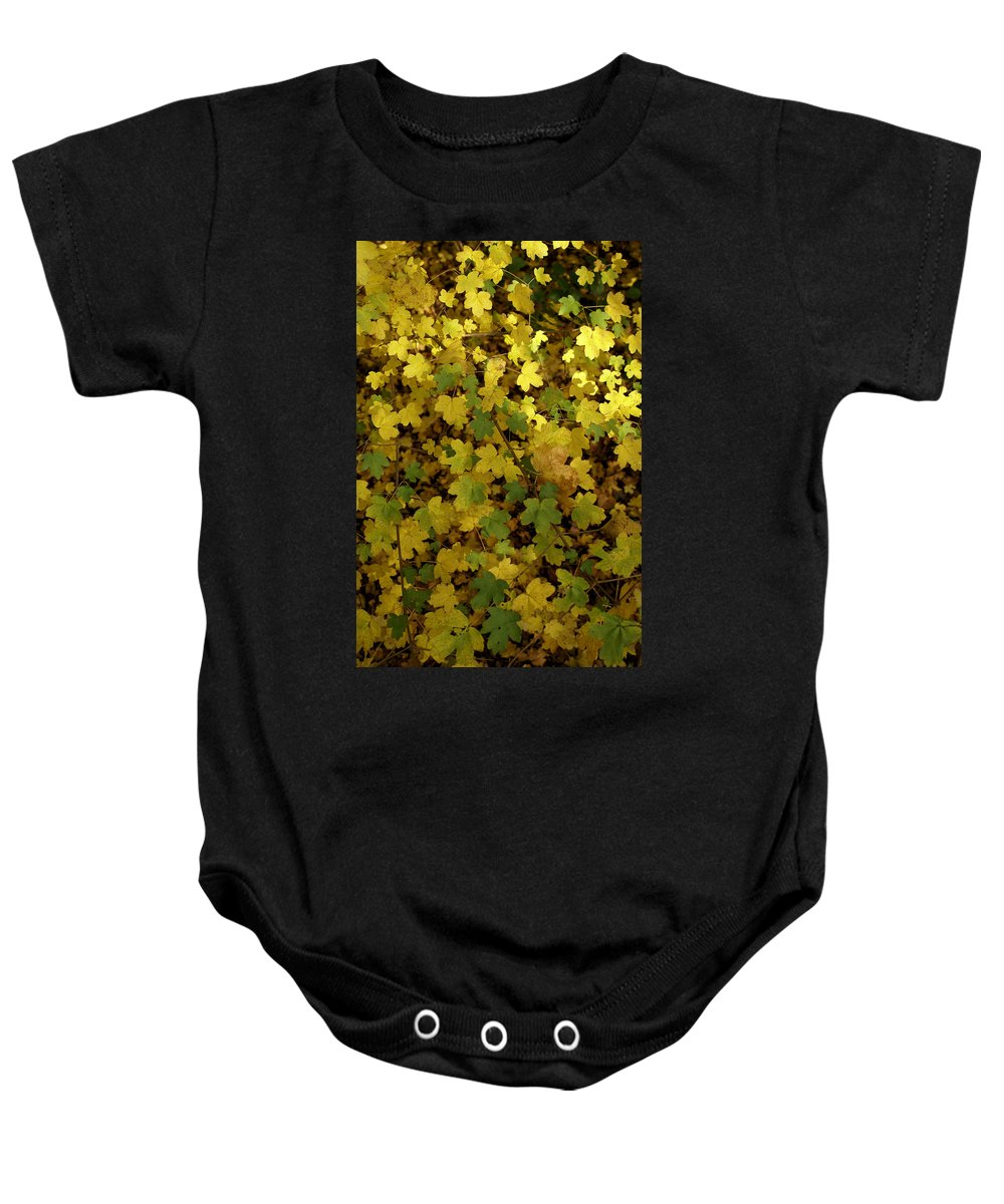 Autumn Baby Onesie featuring the photograph Autumn Leaves 091 by Ron Harpham