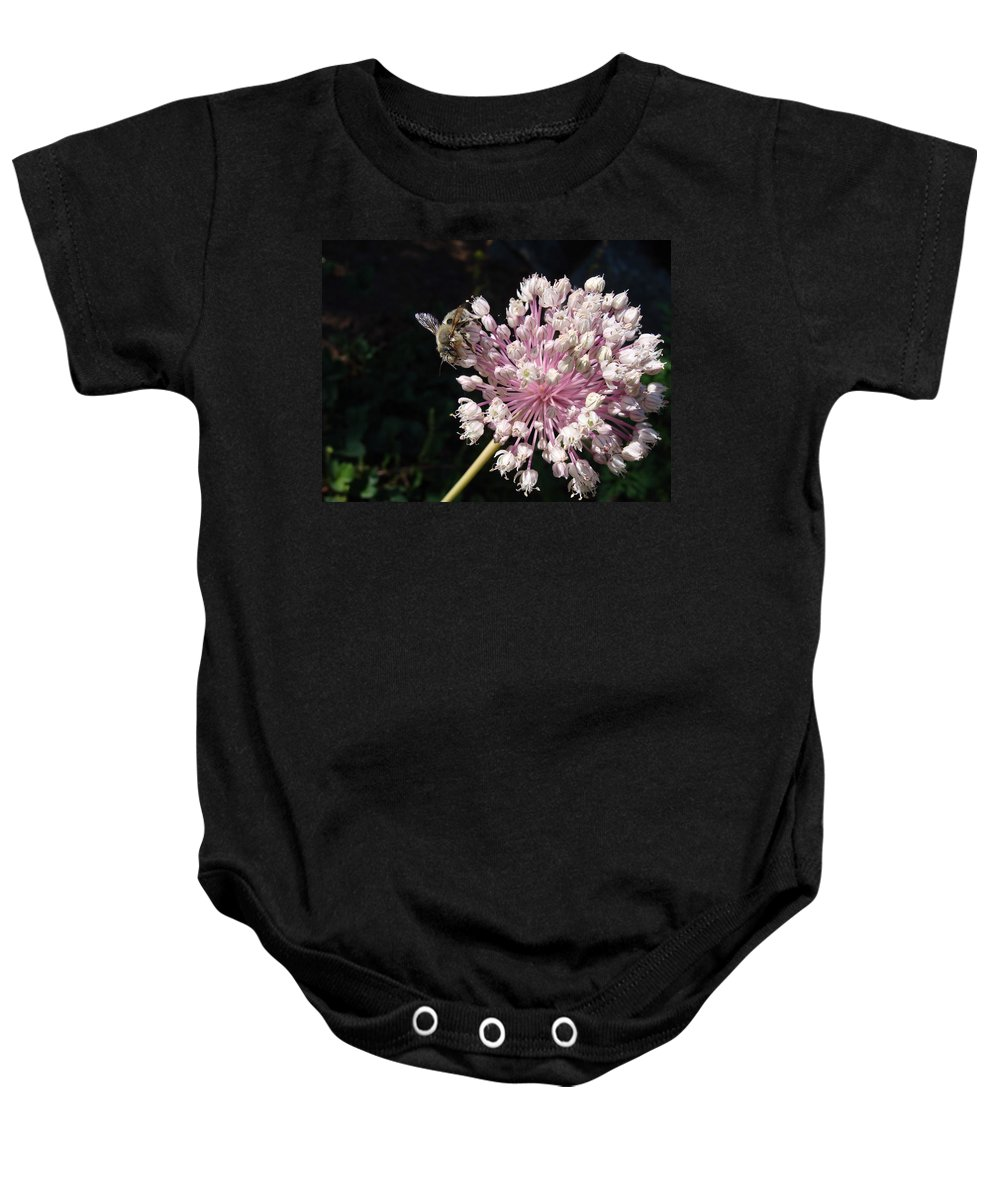 Bee Baby Onesie featuring the photograph Bee And Allium by Cheryl Hoyle