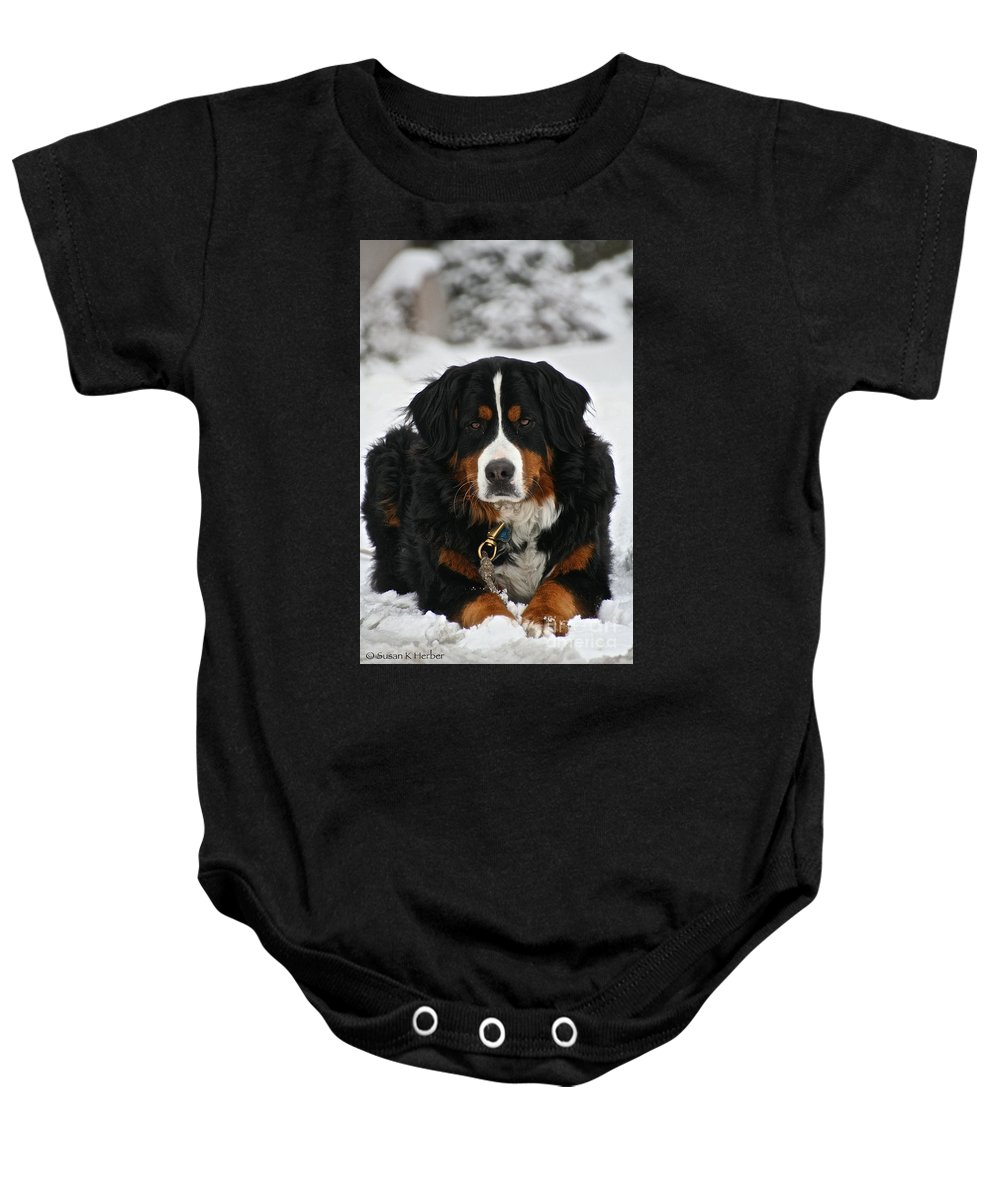 Outdoors Baby Onesie featuring the photograph Bernese Mountain Dog by Susan Herber