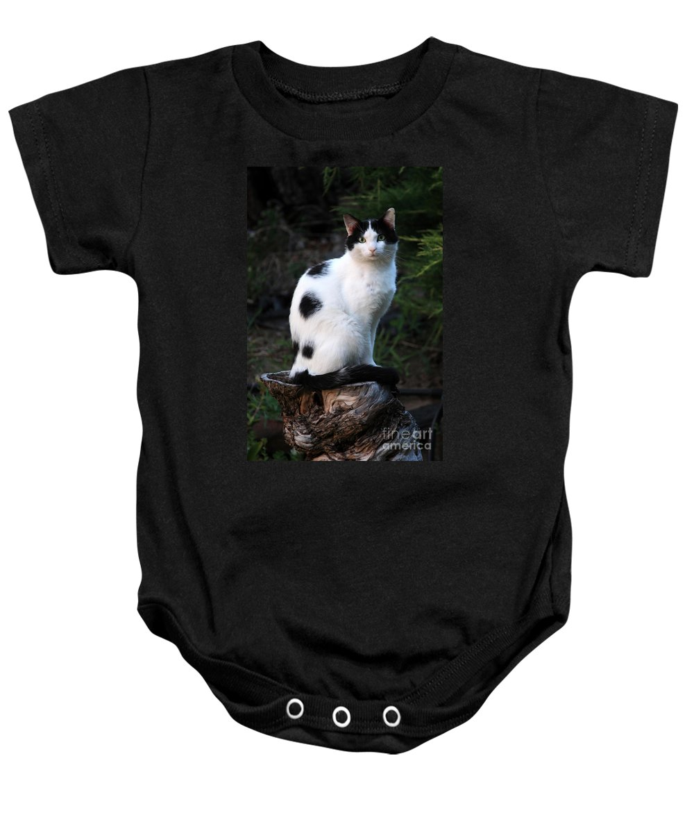 Cat Baby Onesie featuring the photograph Black And White Cat On Tree Stump by Carol Groenen