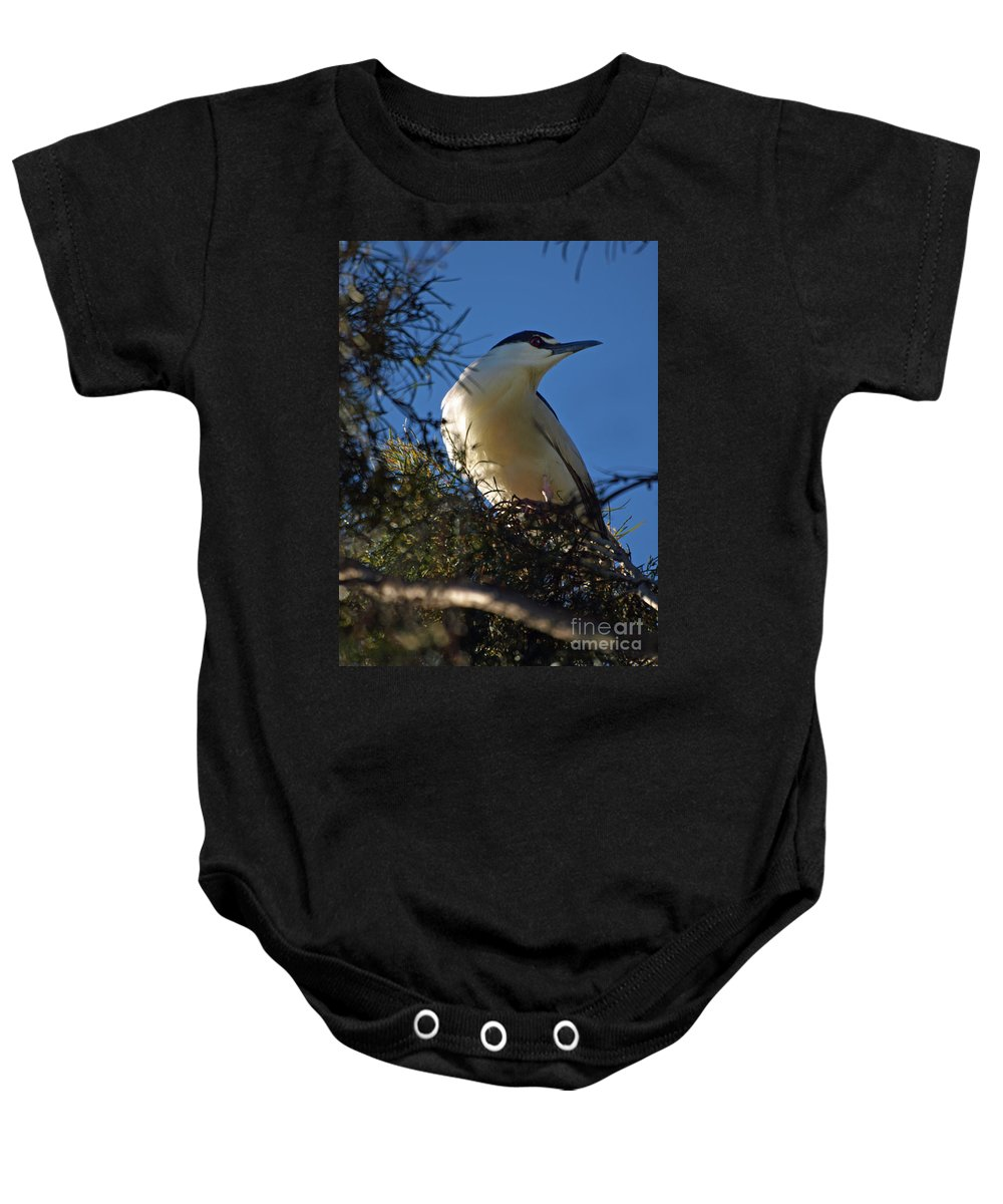 Birds Baby Onesie featuring the photograph Black-crowned Night Heron by Jacklyn Duryea Fraizer