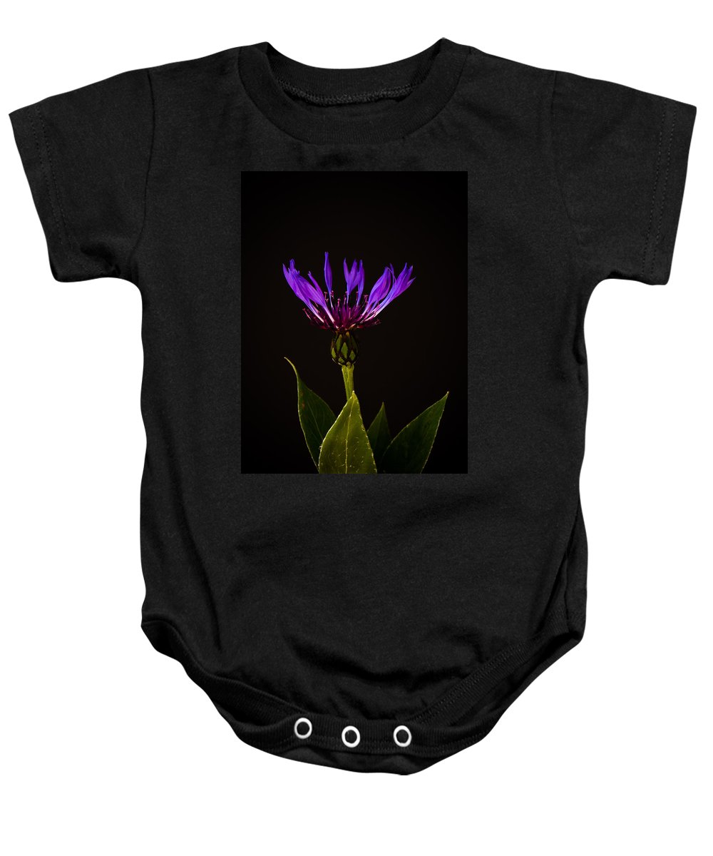 Asteraceae Baby Onesie featuring the photograph Blue Cornflower by Mark Llewellyn