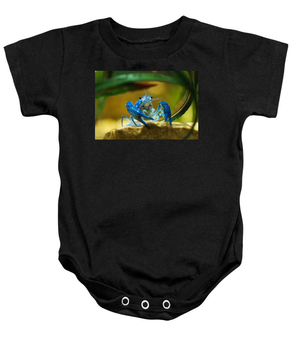 Blue Baby Onesie featuring the photograph Blue Crab by Marilyn Hunt