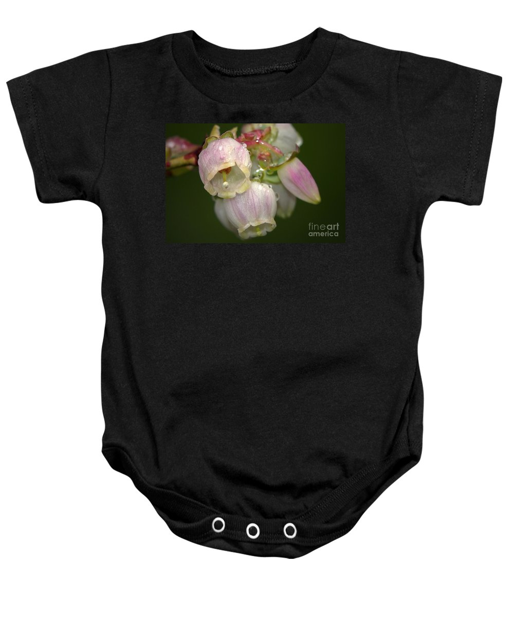 Blueberry Baby Onesie featuring the photograph Blueberry Blossoms by Sharon Talson