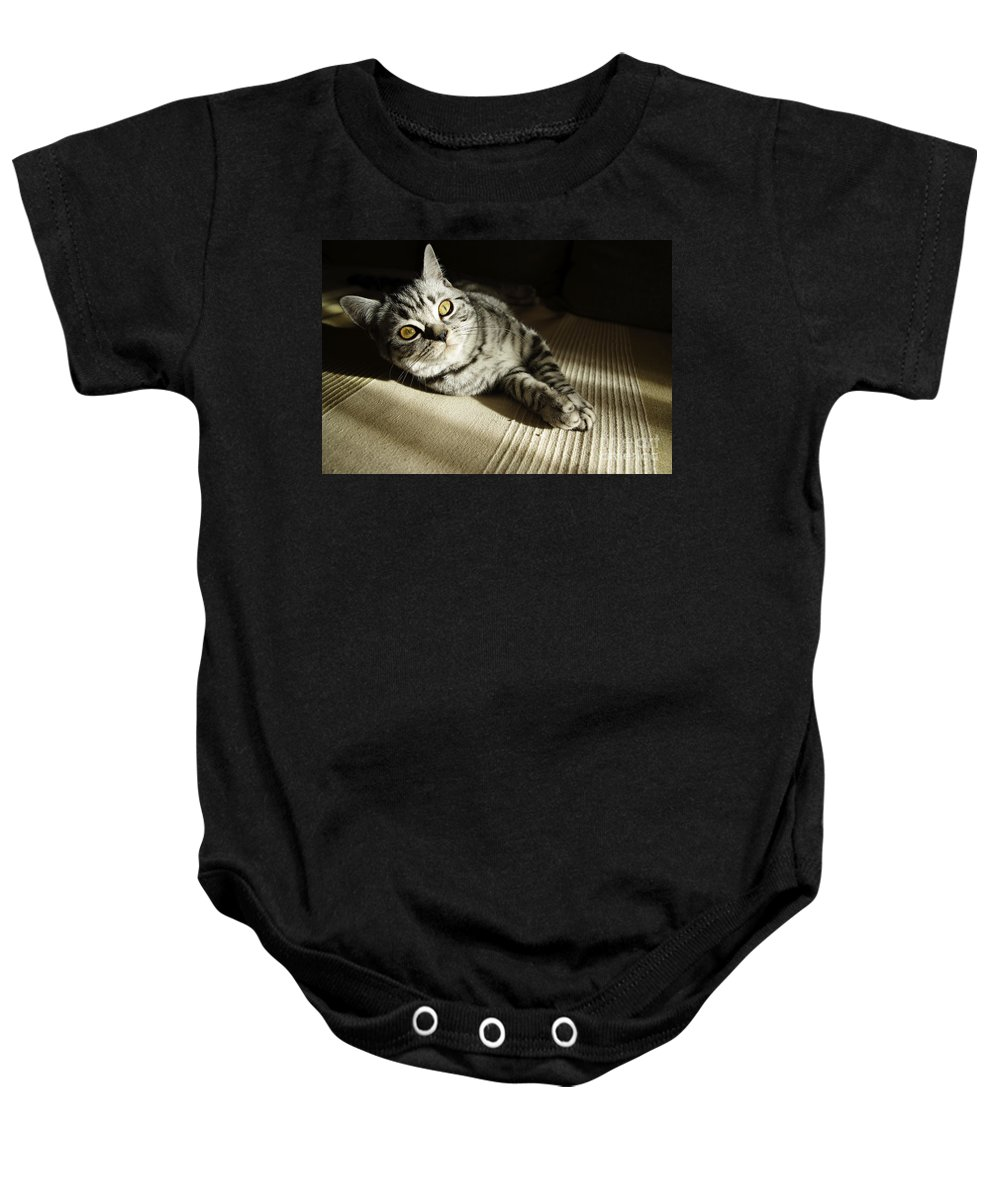 Adult Baby Onesie featuring the photograph British Short Hair by Zoran Berdjan