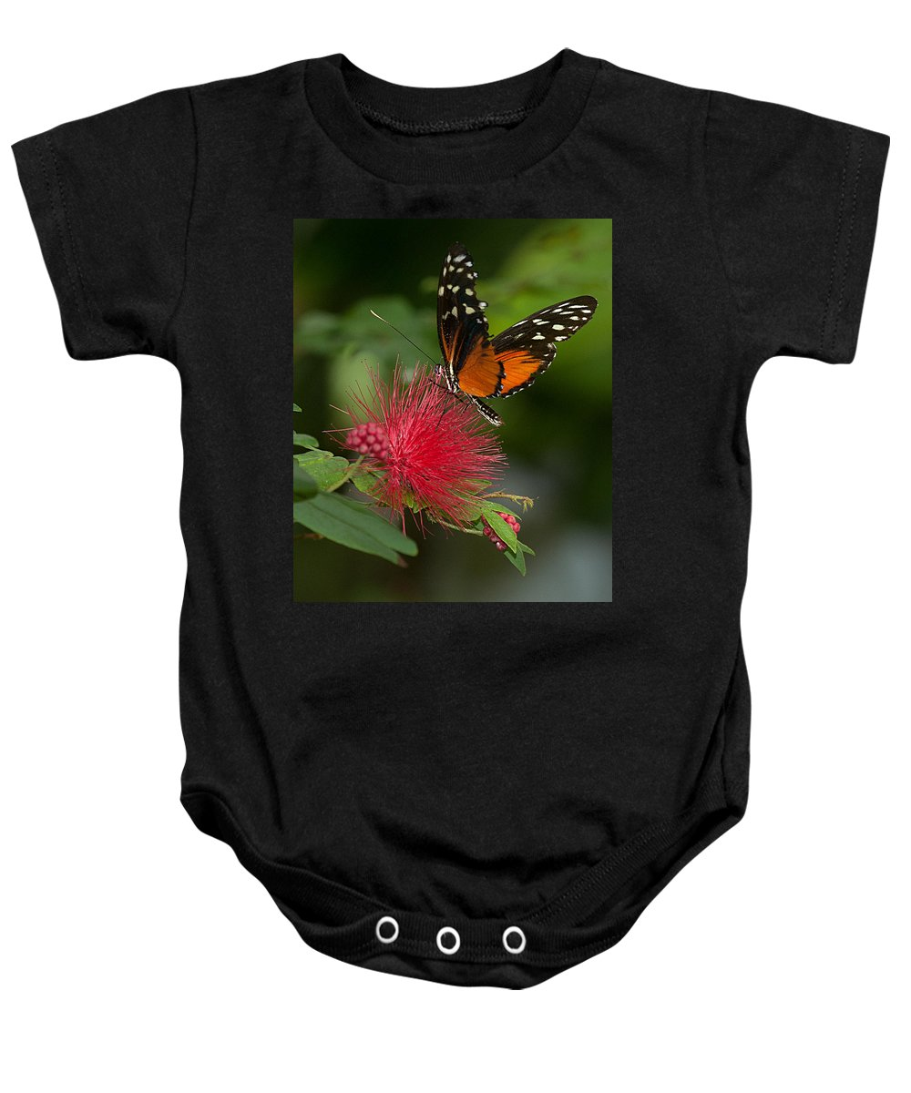 Orange Baby Onesie featuring the photograph Butterfly 62 by Photos By Cassandra