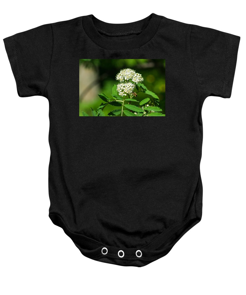 Animal Baby Onesie featuring the photograph Buzzing Bee by Alexander Senin