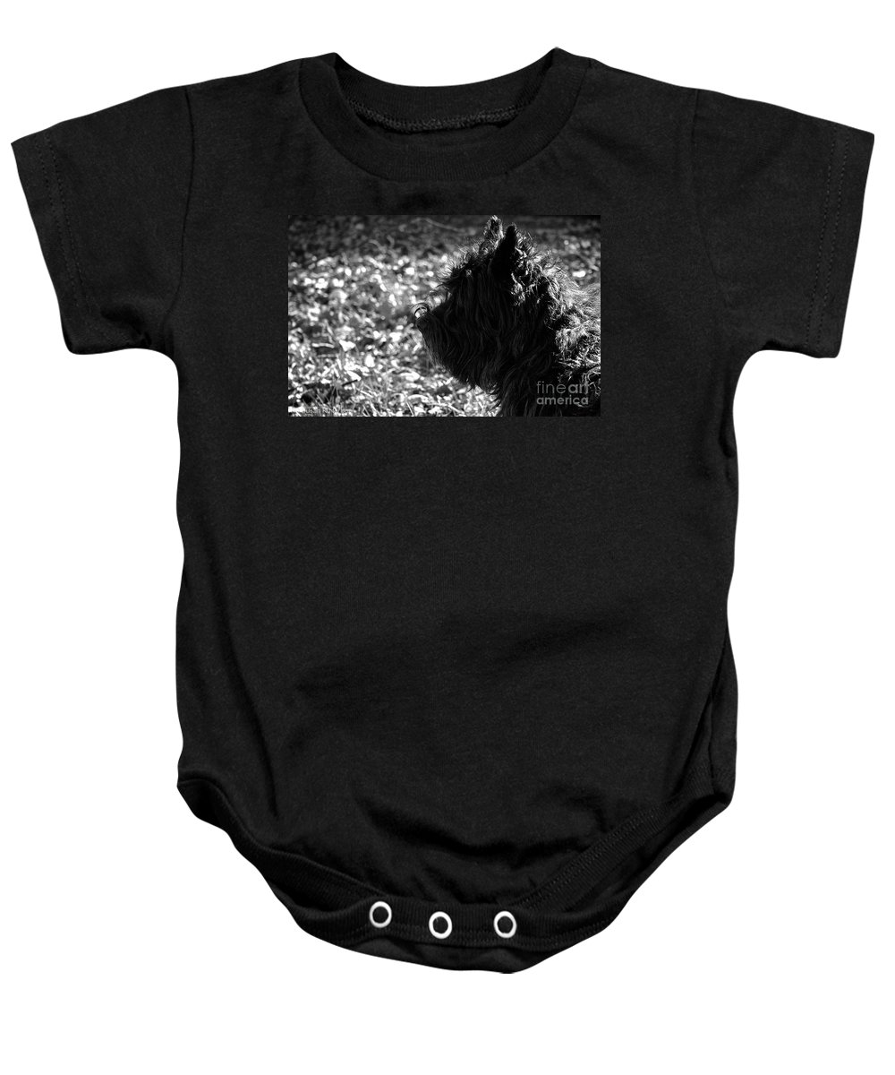 Dog Baby Onesie featuring the photograph Cairn Head Study by Susan Herber