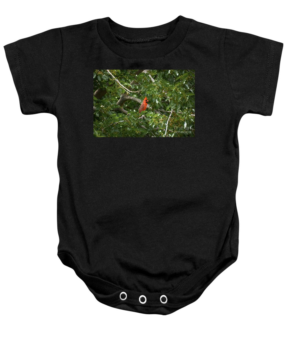 Bird Baby Onesie featuring the photograph Cardinal Posing by M Dale