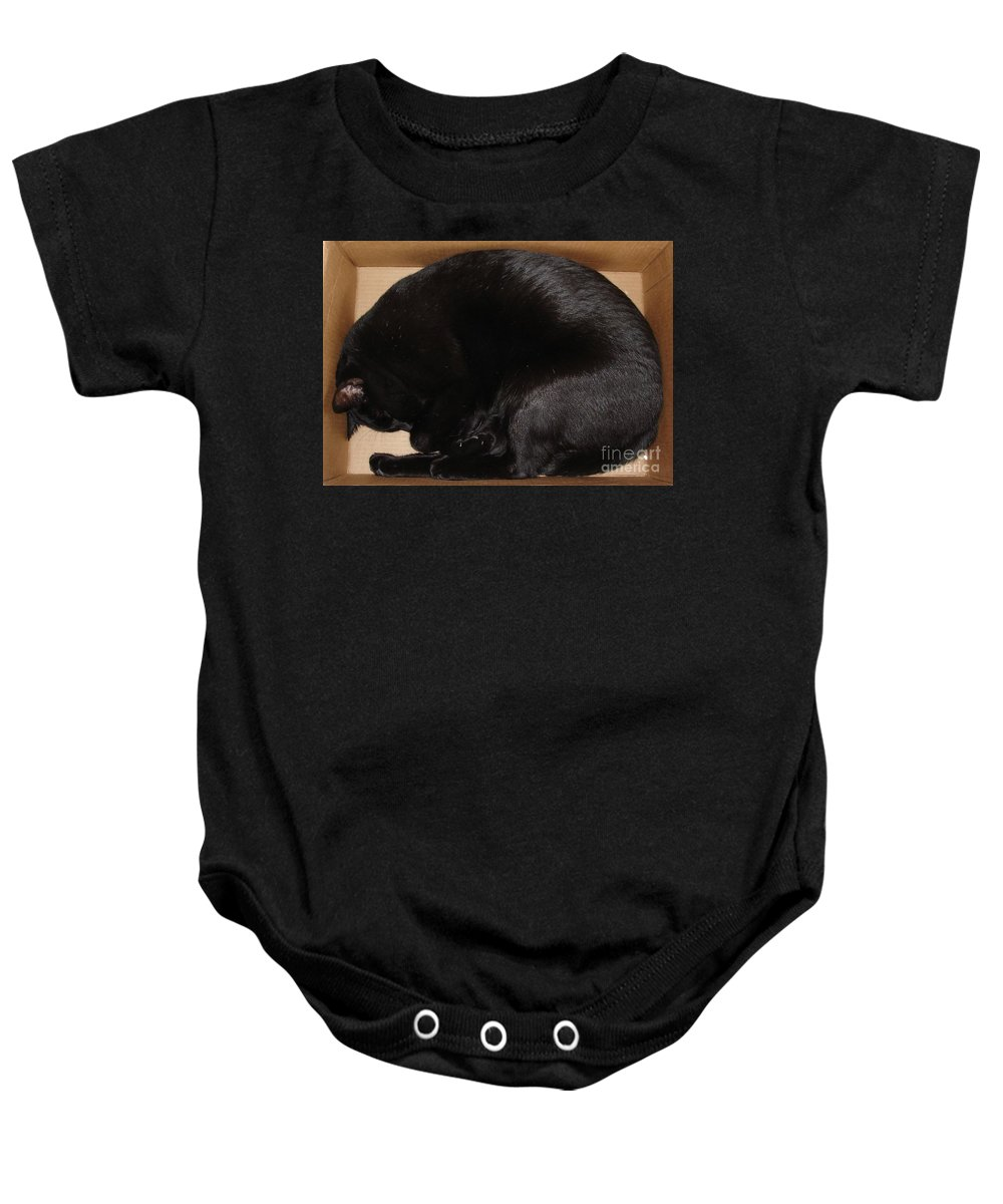 Cat Baby Onesie featuring the photograph Cat In The Box by Kerri Mortenson