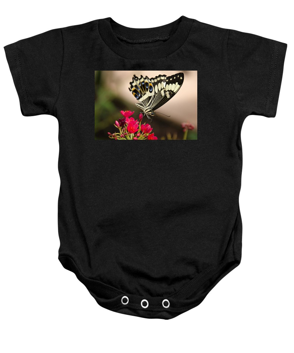 Black And White Butterfly Baby Onesie featuring the photograph Citrus Swallowtail by Saija Lehtonen