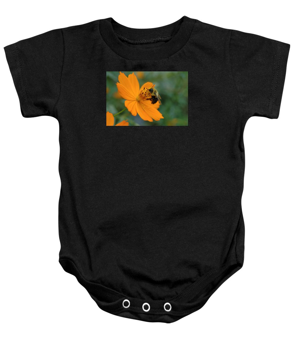 Nature Baby Onesie featuring the photograph Close Up Bee Feeding On Orange Cosmos by Tom Wurl