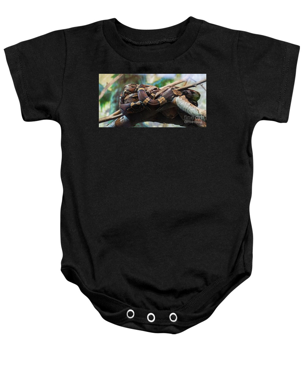 Snake Baby Onesie featuring the photograph Coiled by Bianca Nadeau