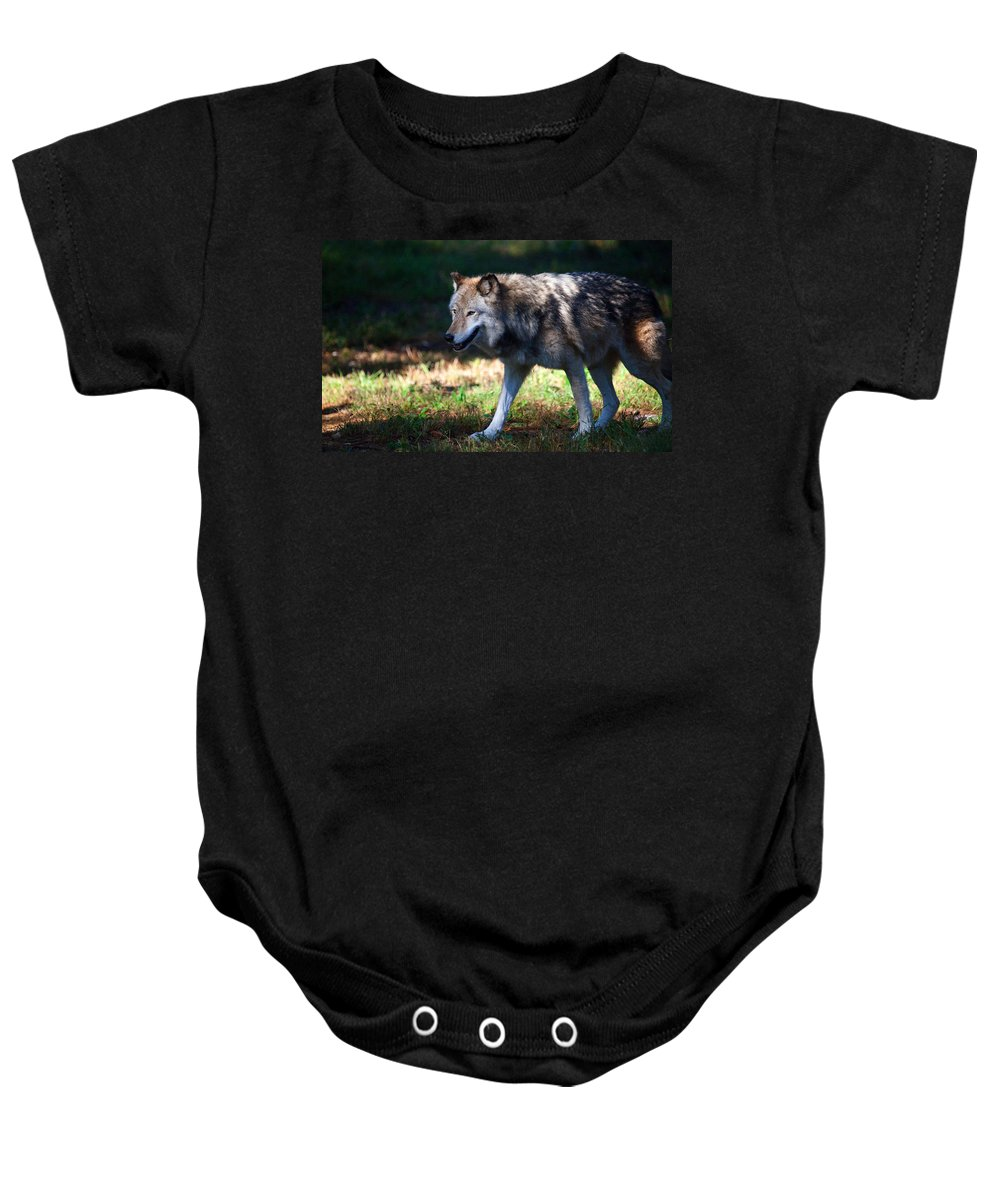 Wolf Baby Onesie featuring the photograph Colorful Wolf by Karol Livote