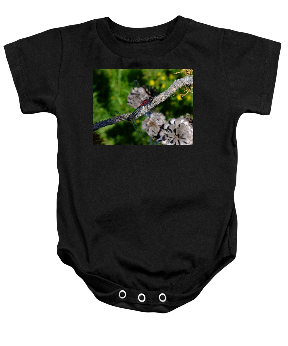 Dragonfly Baby Onesie featuring the photograph Consumate Romantic by Donna Blackhall