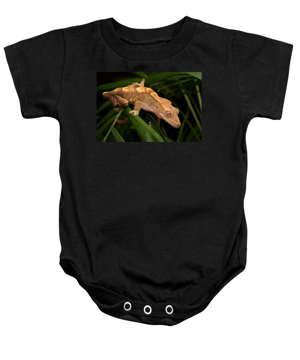New Caledonian Crested Gecko Baby Onesie featuring the photograph Crested Gecko Rhacodactylus Ciliatus by David Kenny