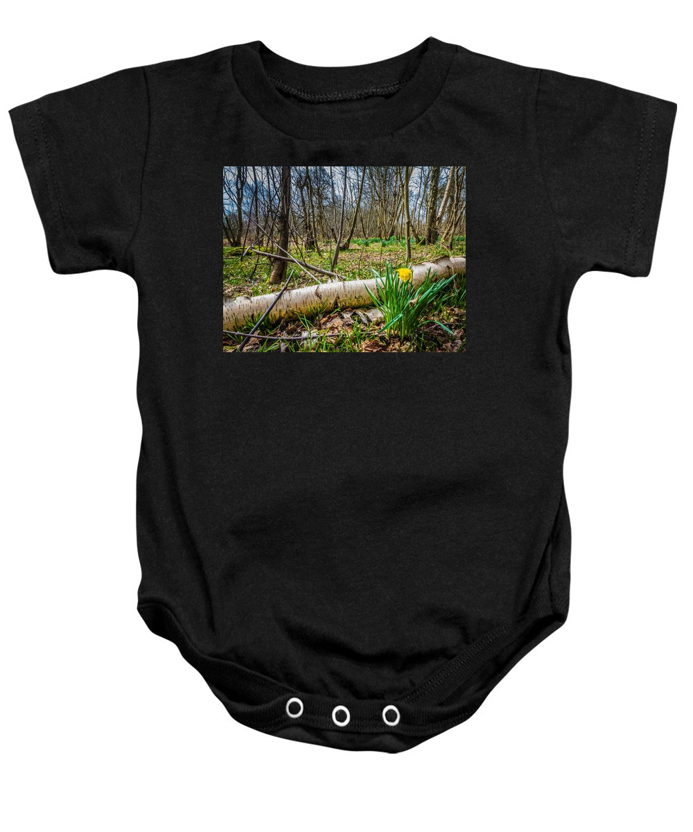 Dawn Oconnor Baby Onesie featuring the photograph Daffodils And Birch by Dawn OConnor