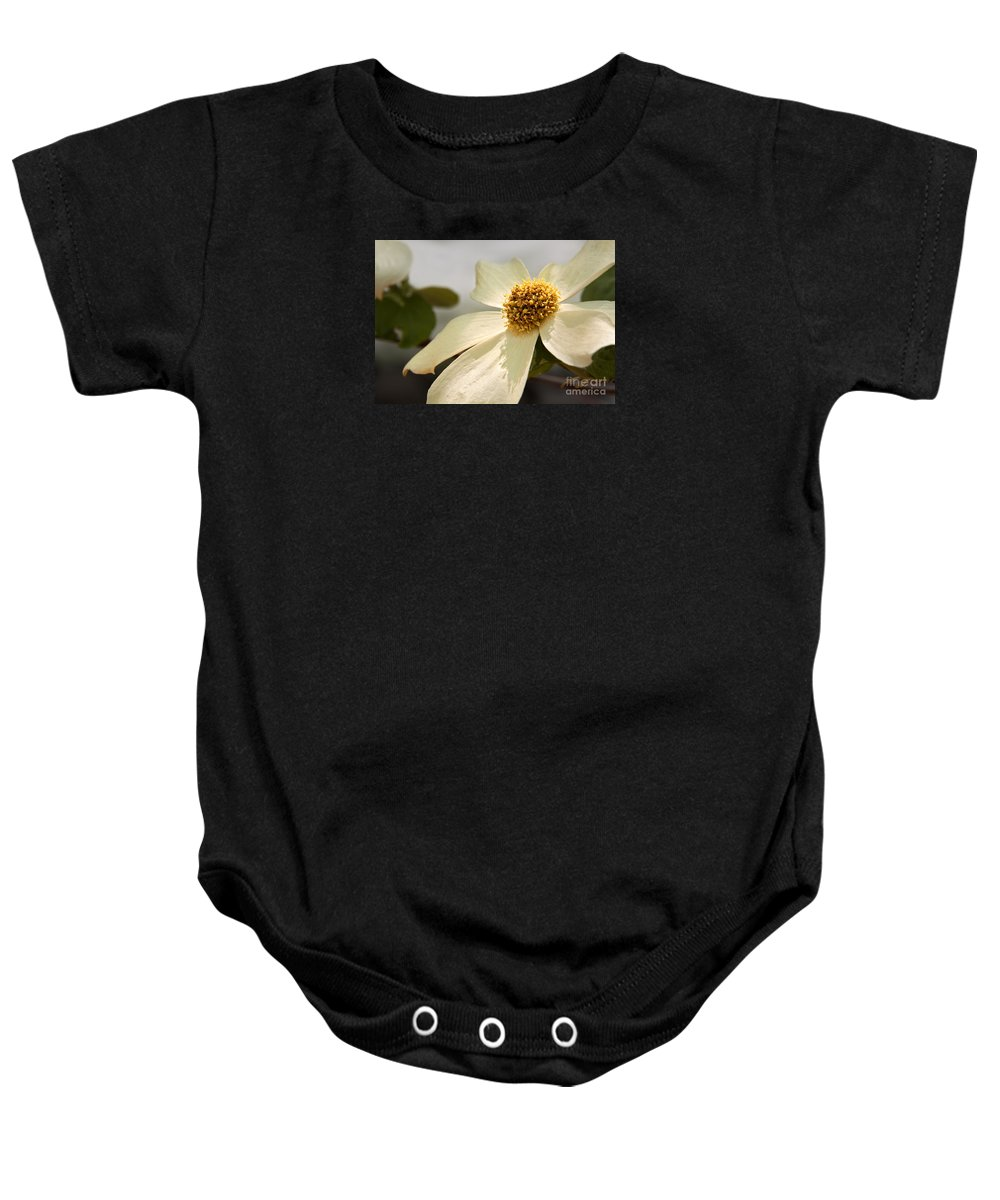 California Baby Onesie featuring the photograph Dogwood Bloom by Alice Cahill