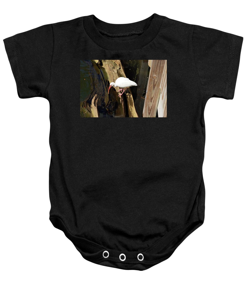 Bird Baby Onesie featuring the photograph White Ibis Bird by Aimee L Maher ALM GALLERY