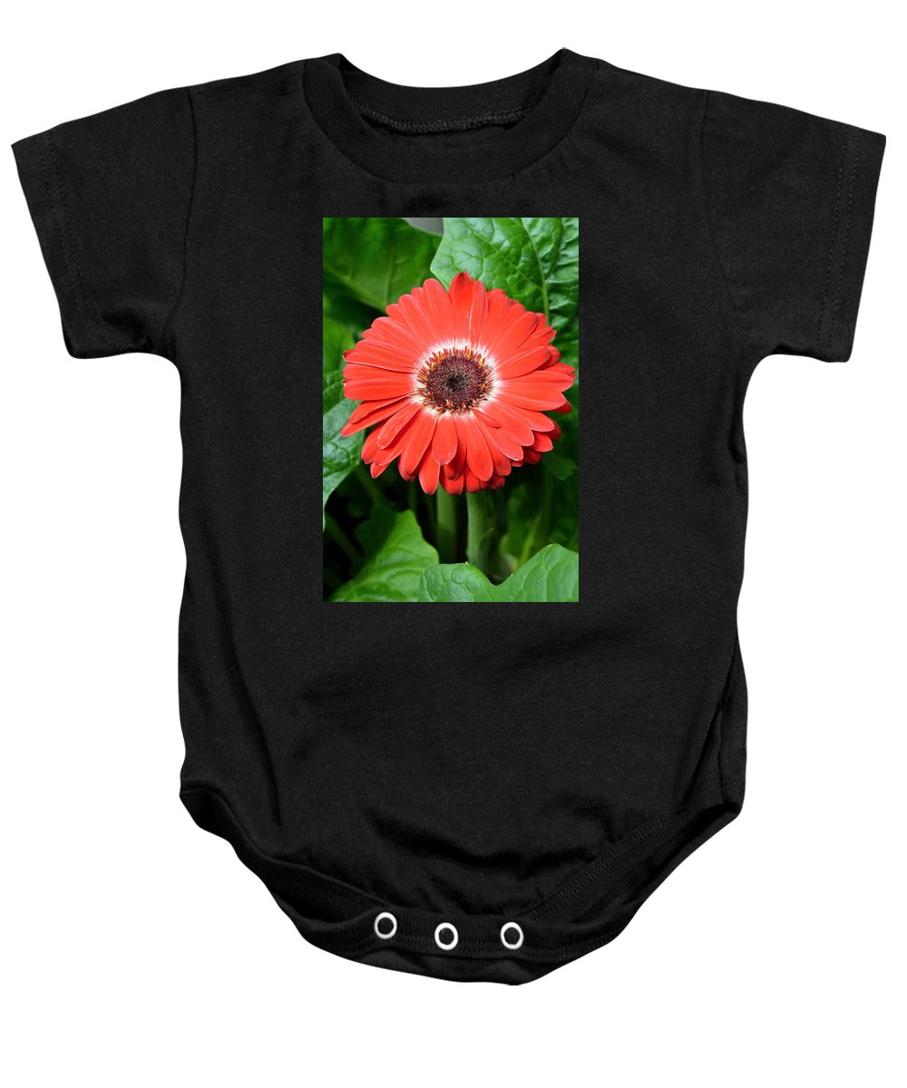 Gerber Baby Onesie featuring the photograph Dsc484d by Kimberlie Gerner