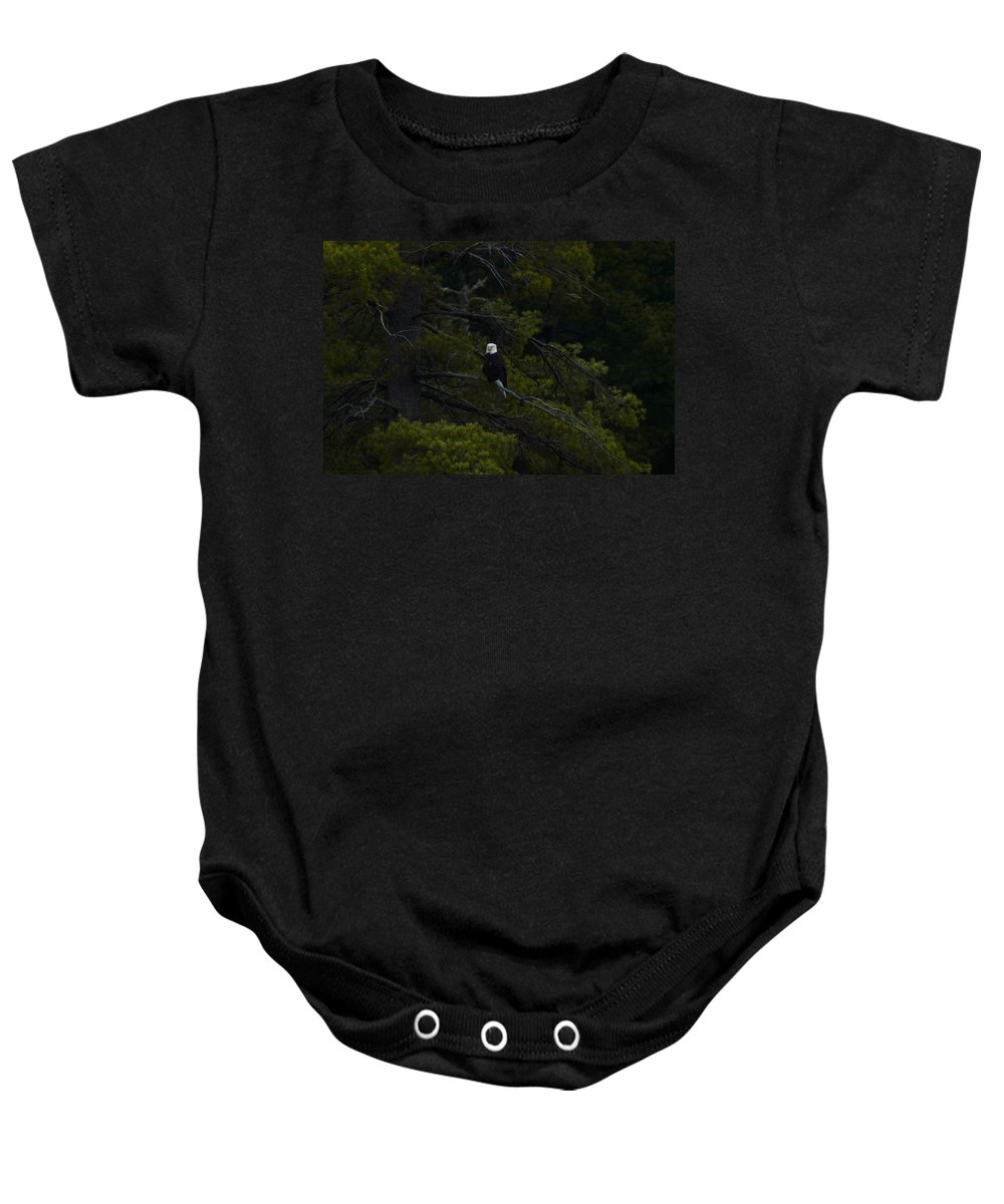 Bald Eagle Baby Onesie featuring the photograph Eagle In White Pine by Thomas Phillips