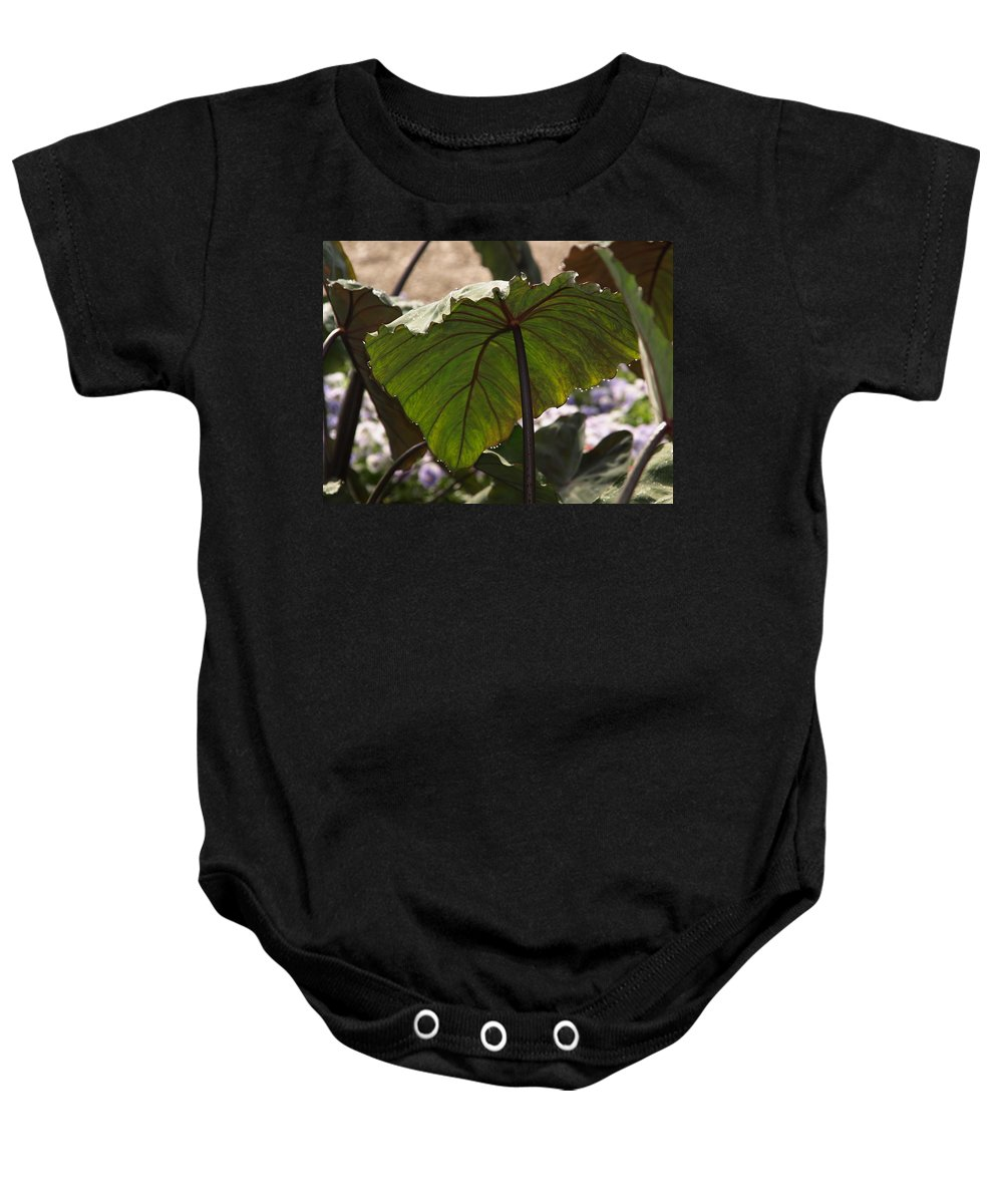 Jim James Baby Onesie featuring the photograph Elephant Ear by James Peterson