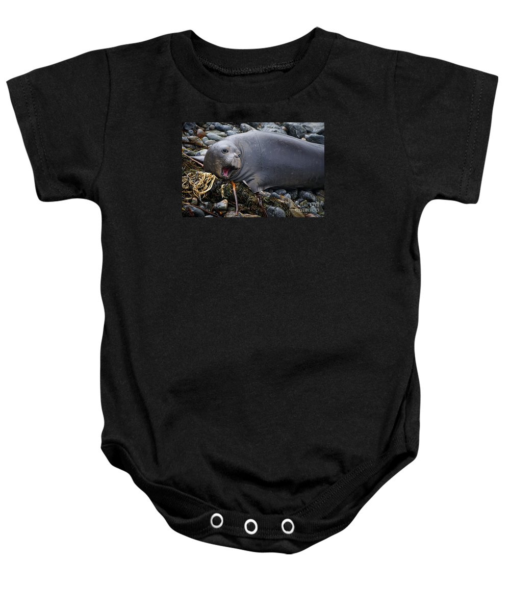 Elephant Seal Of Ano Nuevo Reserve Baby Onesie featuring the photograph Elephant Seal Of Ano Nuevo State Reserve by Priscilla Burgers