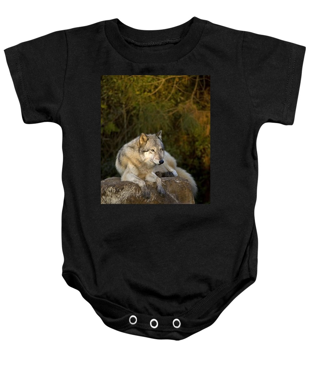 Wolf Baby Onesie featuring the photograph End Of Day by Jack Milchanowski