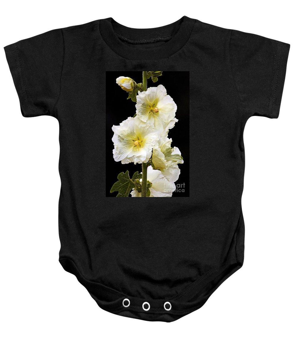 Hollyhock Baby Onesie featuring the photograph Fragile Flower by Joe Geraci