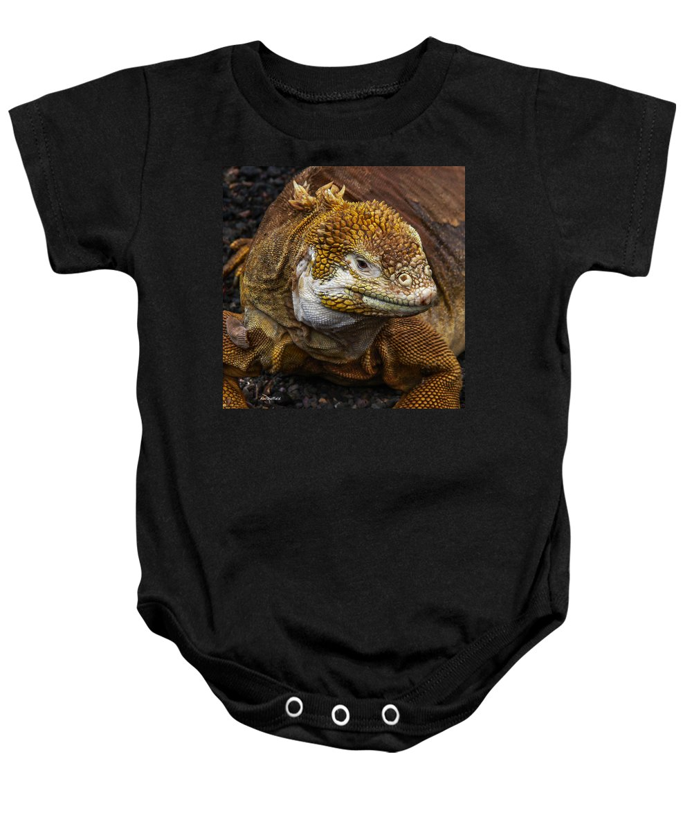 Galapagos Baby Onesie featuring the photograph Galapagos Land Iguana by Allen Sheffield
