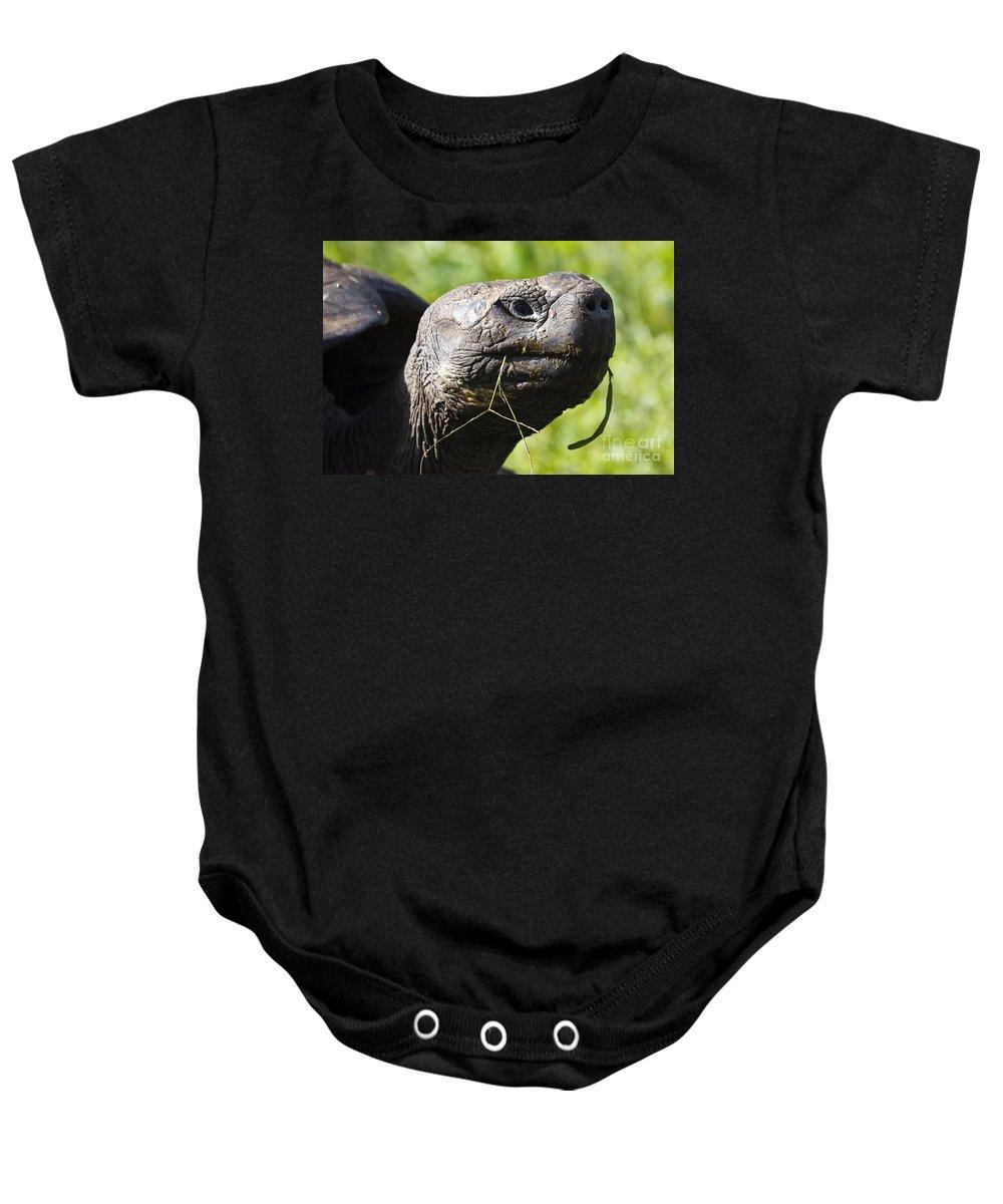 Travel Baby Onesie featuring the photograph Galapagos Tortoise Galapagos Islands National Park Santa Cruz Island by Jason O Watson