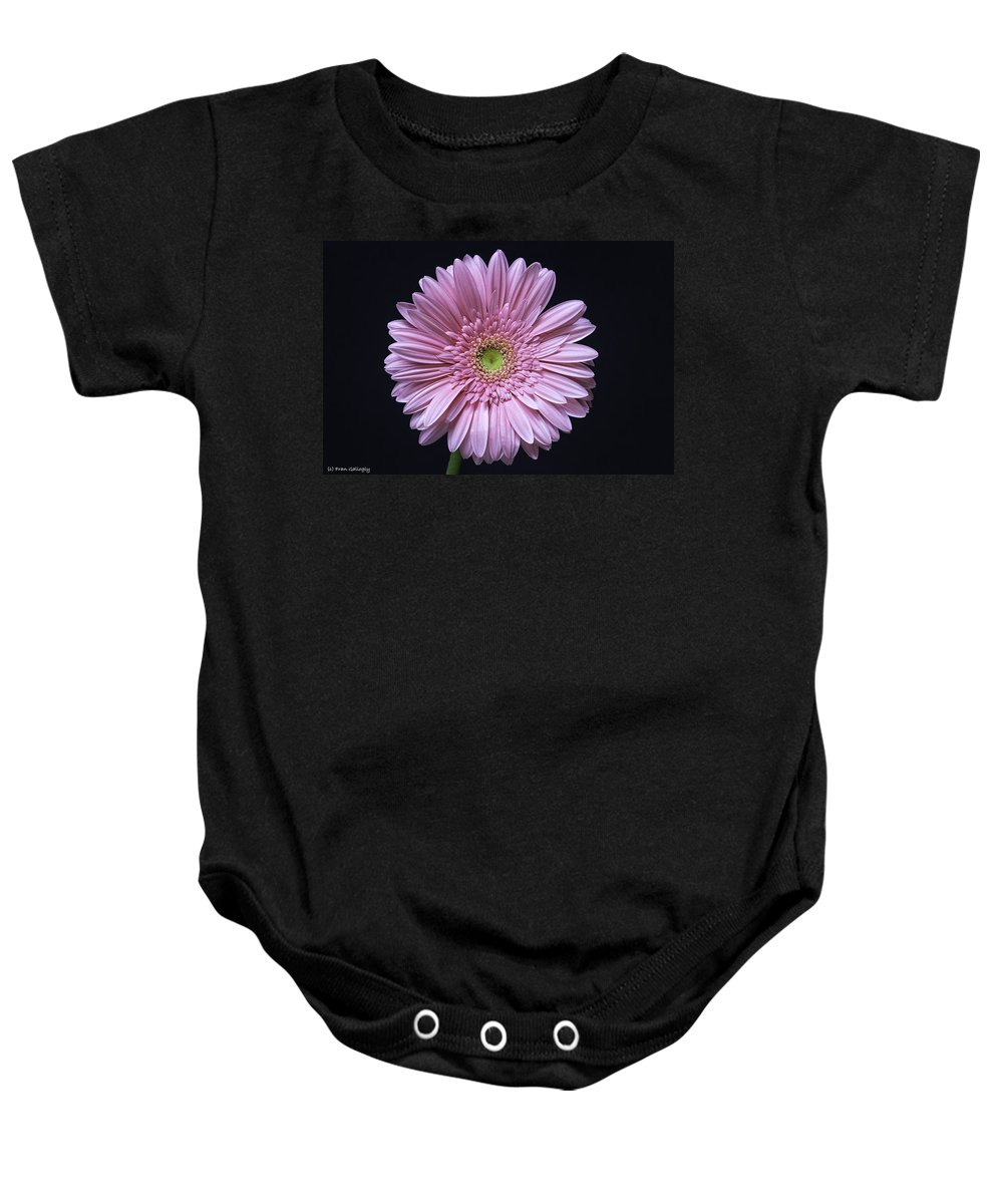 Flower Baby Onesie featuring the photograph Gerber Daisy Flower by Fran Gallogly