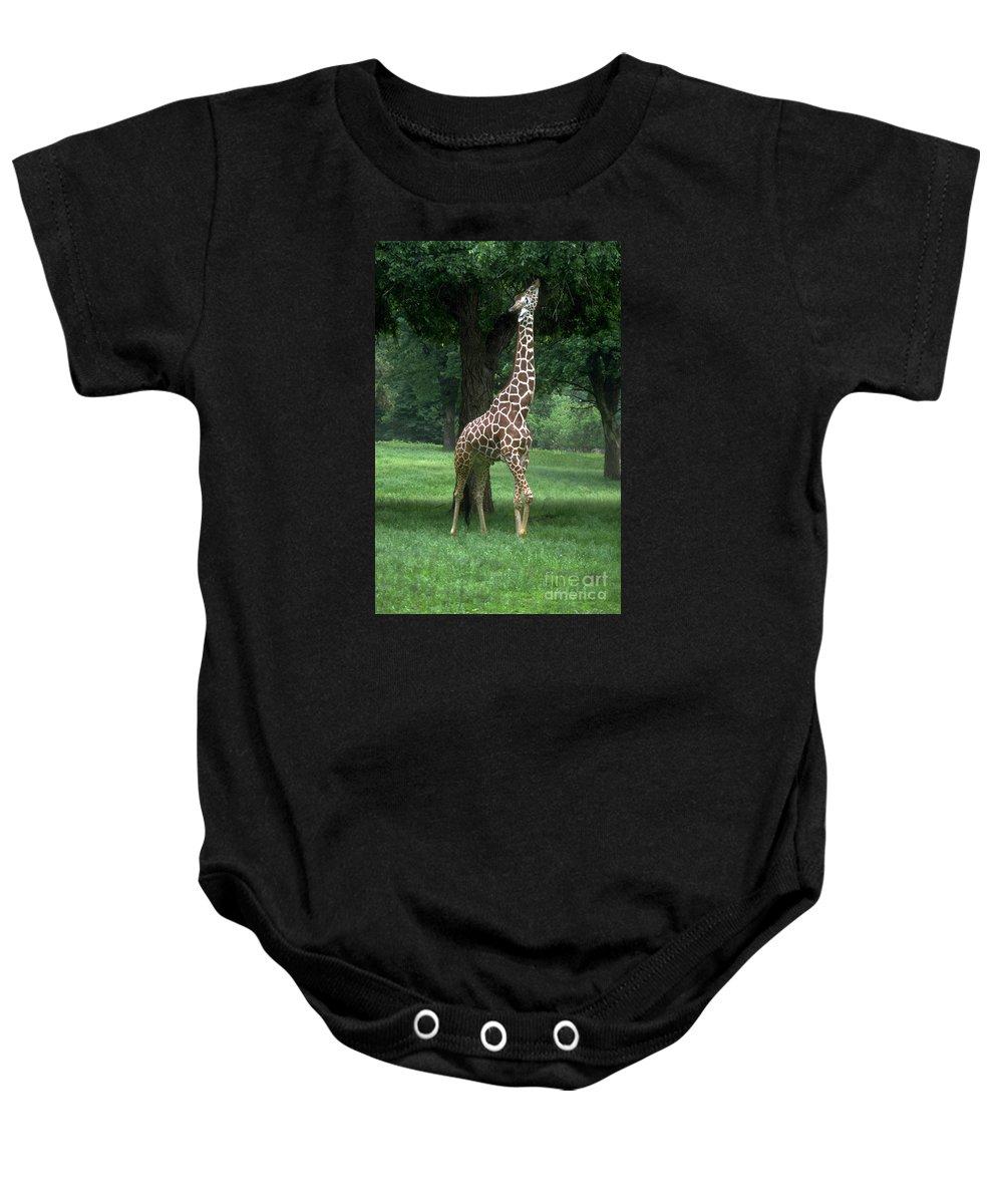 Giraffe Baby Onesie featuring the photograph Giraffe by Gary Gingrich Galleries