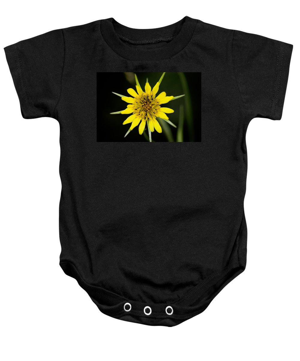 Glacier National Park Baby Onesie featuring the photograph Golden Star Flower Yellow Salsify Glacier National Park by Rich Franco
