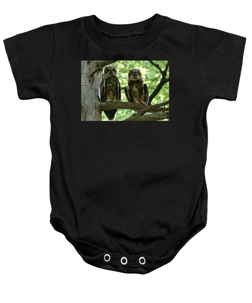 Owlets Baby Onesie featuring the photograph Gorgeous Great Horned Owls by Cheryl Baxter