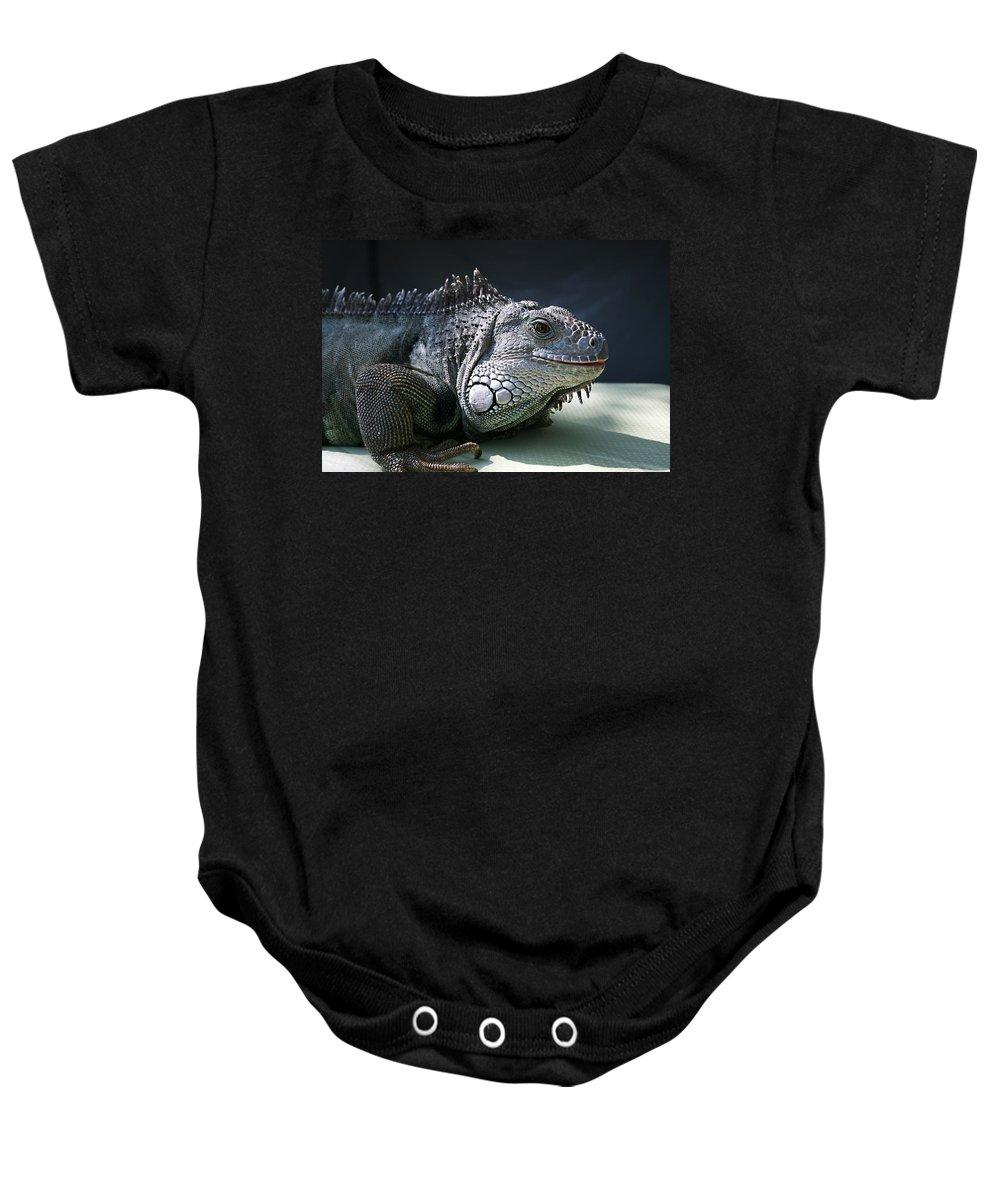Green Iguana Baby Onesie featuring the photograph Green Iguana 1 by Ellen Henneke