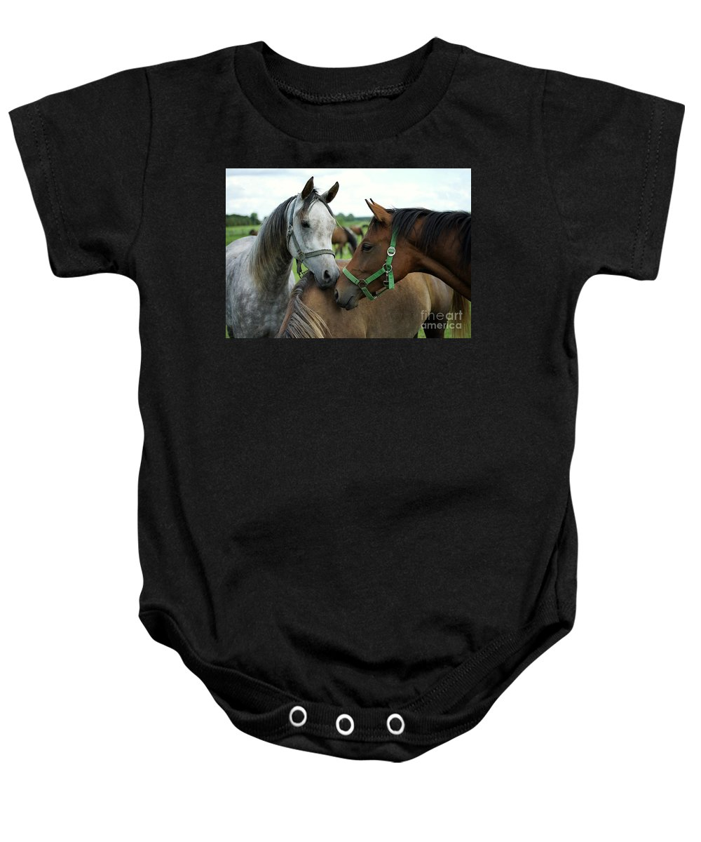 Horse Baby Onesie featuring the photograph Having A Chat by Angel Ciesniarska