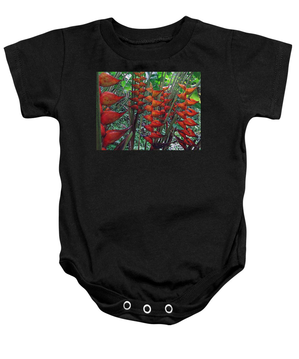 Heliconia Baby Onesie featuring the photograph Heliconia Haven by Ethel Mann