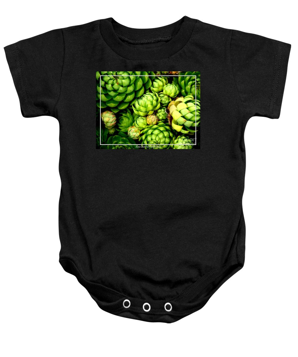 Hens And Chicks Baby Onesie featuring the photograph Hens And Chick Plants by Rose Santuci-Sofranko