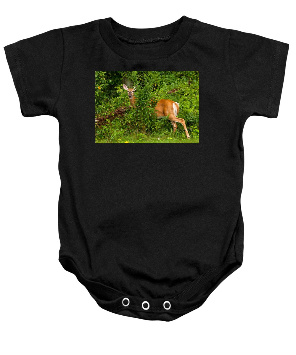Deer Baby Onesie featuring the photograph Hey I Eating Here by Karol Livote