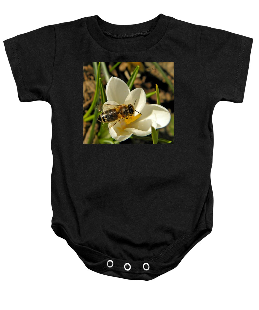 Insect Baby Onesie featuring the photograph Honey Bee And Crocus by Chris Berry