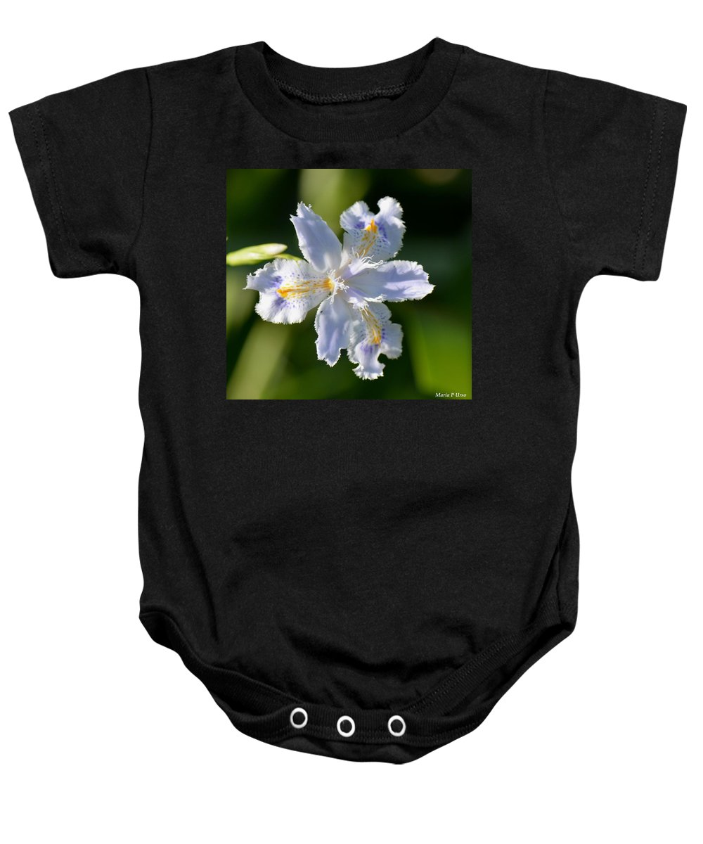Iris Pacifica Baby Onesie featuring the photograph Iris Pacifica by Maria Urso